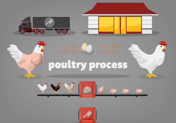 Free Poultry Process Vector Illustration - Kostenloses vector #360031