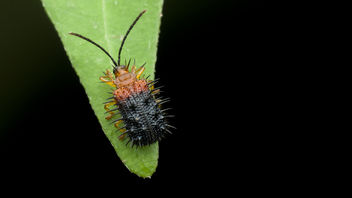 Spiky yet cute beetle - Kostenloses image #365091