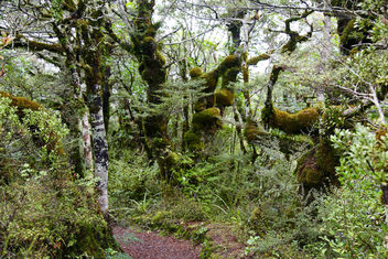 Middle Earth Tongariro National park Bush - Kostenloses image #365491