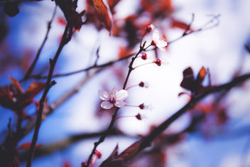 Blooming tree - image #366001 gratis