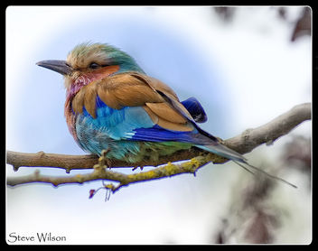 The most colorful of birds ? - image #366711 gratis
