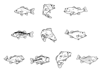 Free Bass Fishes Vector - Kostenloses vector #367721