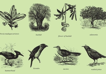 Madagascar Trees And Birds - Free vector #369421