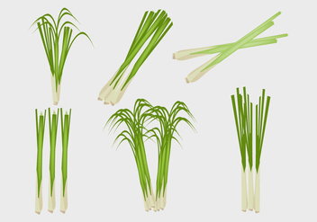 Lemongrass Illustration Vector - Free vector #369591