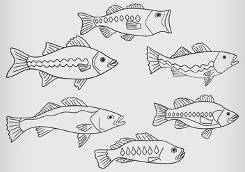 Bass Fish Vector - Free vector #370211