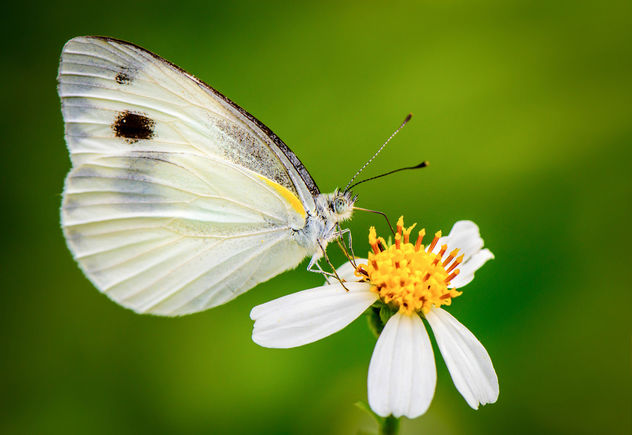 Butterfly - Free image #370641