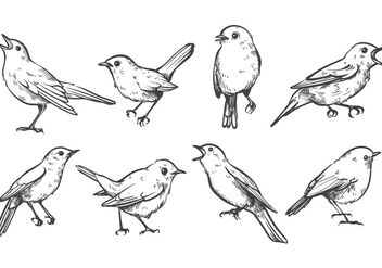 Free Nightingale Vectors - vector #375751 gratis