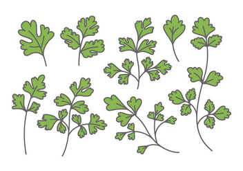 Chinese Parsley Vectors - бесплатный vector #382871