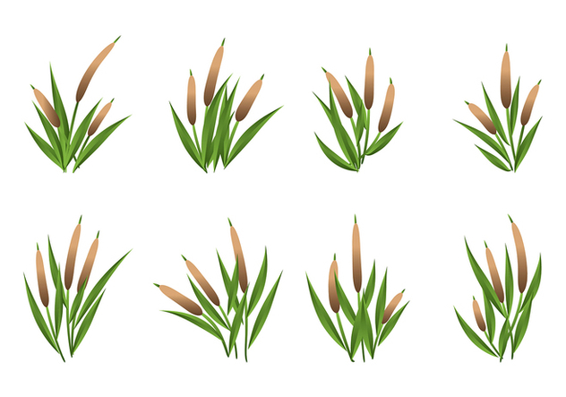 Cattails Vector Set - Free vector #383541