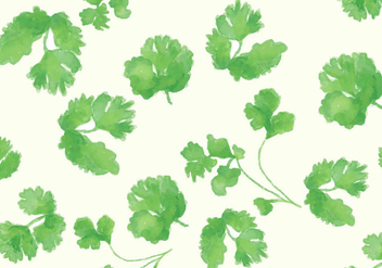 Cilantro Vector Set - бесплатный vector #383881