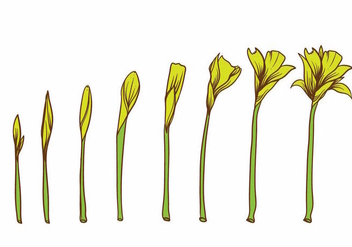 Yellow Flower Grow Up Plant Set - vector gratuit #384171