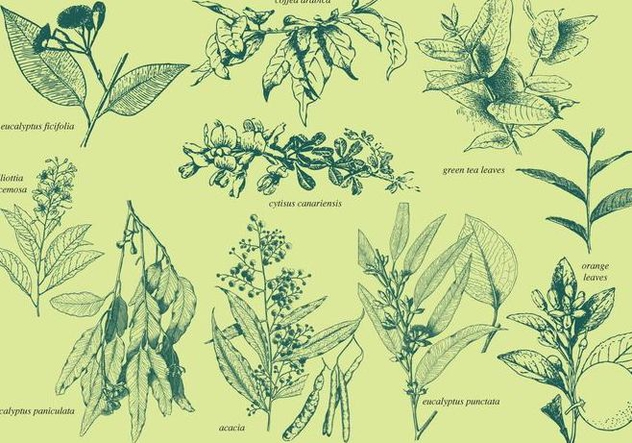 Aromatic Plants - Free vector #385631