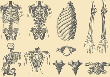 Human Bones And Deformations - vector gratuit #386471