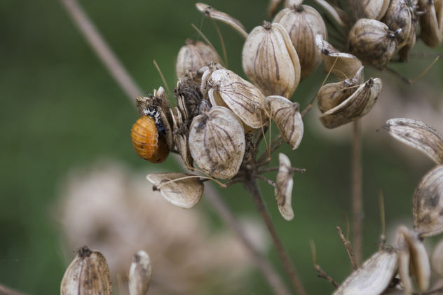 The birth of a Ladybug - 1 - image gratuit #388691