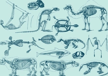 Vintage Animal Skeletons - vector gratuit #388851