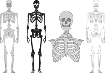 Skeleton and bones vector set - vector gratuit #389301