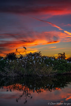 Sunset at the Rookery - image gratuit #389421