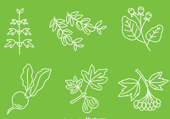 Hand Drawn Medical Herb Vector - Kostenloses vector #389751