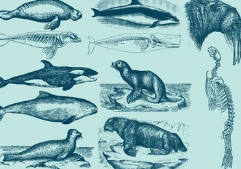 Aquatic Mammals - Free vector #391811