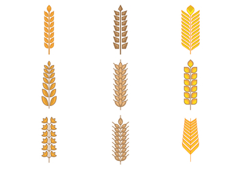 Free Types of Grains, Cereal, and Oats Vector - vector gratuit #392681