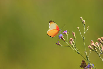 Butterfly_02 - Free image #394491