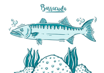 Free Barracuda Fish - Free vector #394981