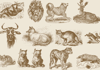 Sepia Mammal Illustrations - vector gratuit #395161