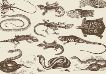 Reptile Illustrations - vector gratuit #395381