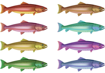 Vector Of Rainbow Trout - Free vector #399131
