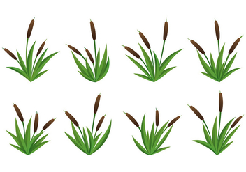 Set Of Cattails Vector - Free vector #399171