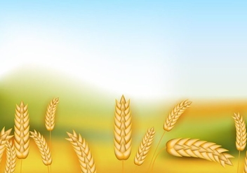 Rice Crop Flowers In The Field - Free vector #400451