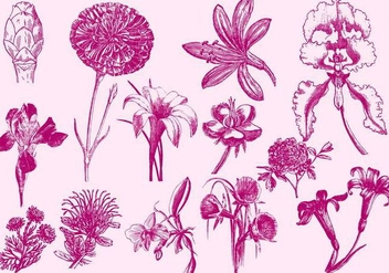 Pink Exotic Flower Illustrations - vector gratuit #401101