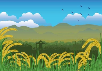 Free Rice Field Illustration - бесплатный vector #402441