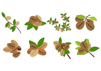 Free Argan Fruit Vector - Free vector #402561