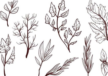 Free Cooking Herbs Vectors - бесплатный vector #403801