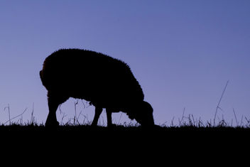 The Black sheep - image #403861 gratis