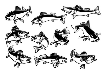 Free Walleye Vector - Free vector #404261