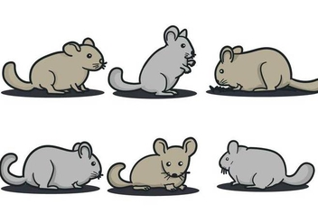 Chinchilla Vector - vector #404851 gratis