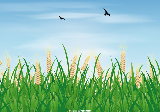 Rice Field Illustration - Free vector #406321
