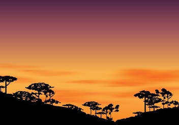 Silhouette Of Araucaria At The Afternoon With Sunset Sky - Free vector #406511