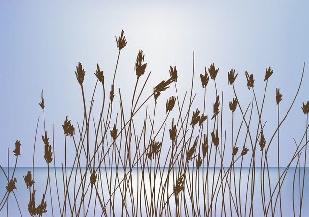 Reeds On Sunset Background Vector - Free vector #406551