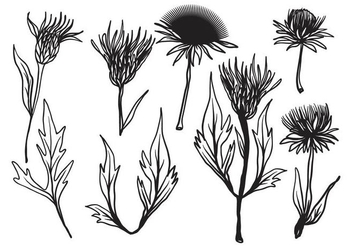 Free Hand Drawn Thistle Vector - vector gratuit #406711
