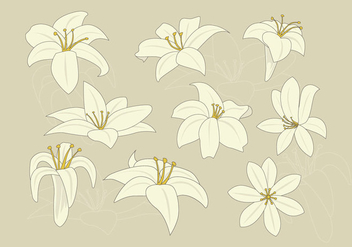 Free Easter Lily Vector - Kostenloses vector #409321