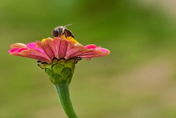 Flower & Bee - image #412681 gratis