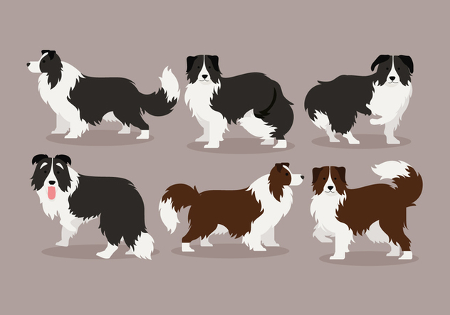 Border Collie Vector - бесплатный vector #412861