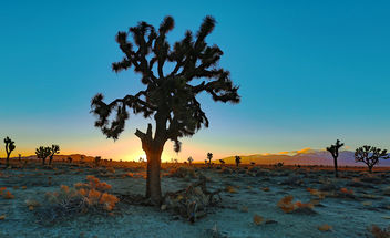 Joshua Tree Morning - Kostenloses image #415271