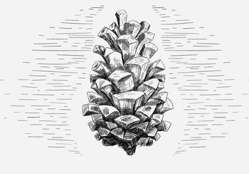 Free Vector Pine-cone Illustration - бесплатный vector #417081