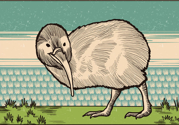 Vintage Illustration Of Kiwi Bird - Kostenloses vector #418651