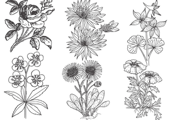 Vintage Flowers Collection - vector gratuit #422191