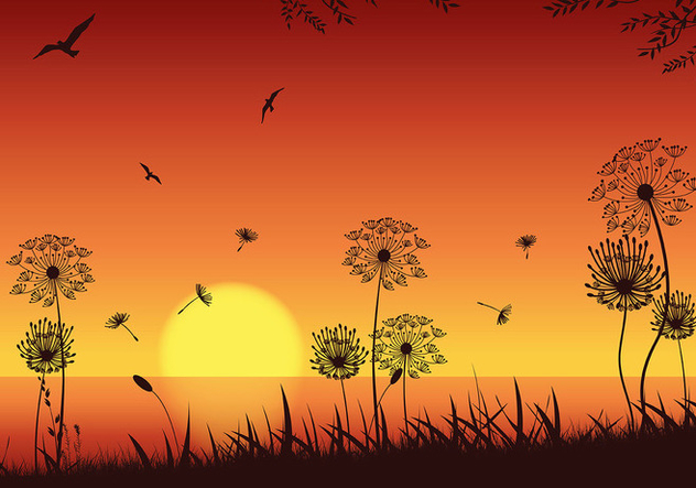 Blowball Sunset Seashore Vector - Kostenloses vector #423681